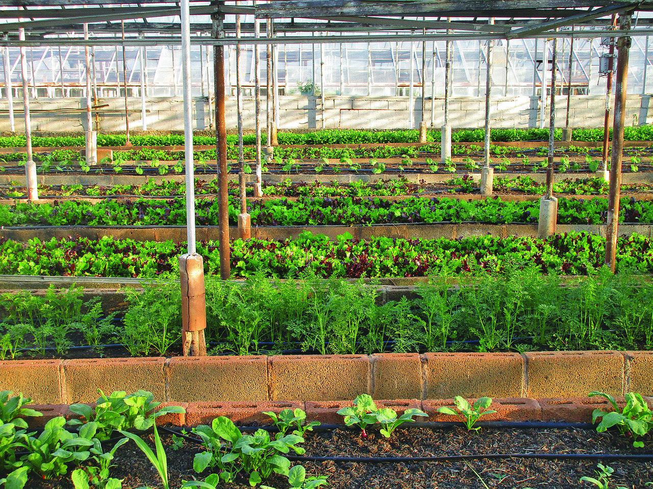 Agriculture urbaine / Urban Agriculture